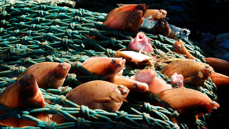 Fische im Netz: China ist Nordkoreas wichtigster Handelspartner