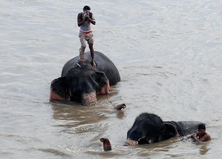 Unterwegs mit Elefanten: Was ist aus Ihren Kindheitsträumen geworden?