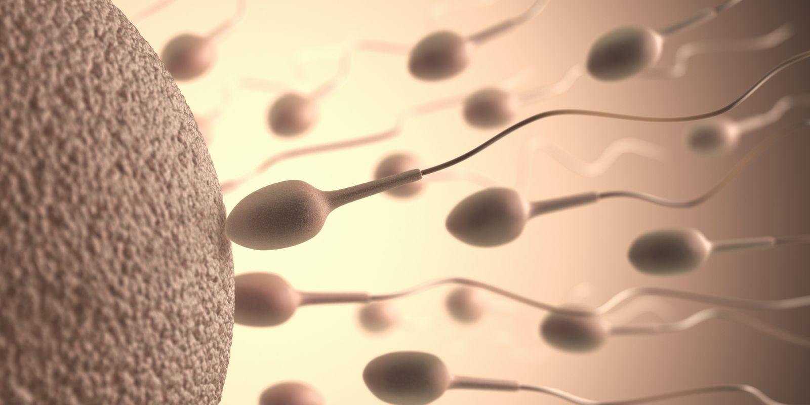 NICHT MEHR VERWENDEN! - Human sperm and egg