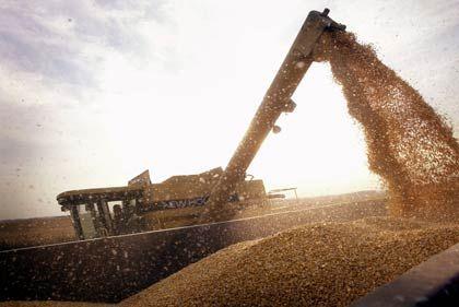 Weizenernte: Konkurrenz zwischen Treibstoff und Lebensmittel