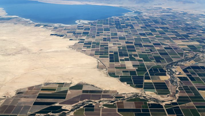 Grüne Inseln inmitten brauner Dürre: Wie Kaliforniens Stars sich vorm Wassersparen drücken