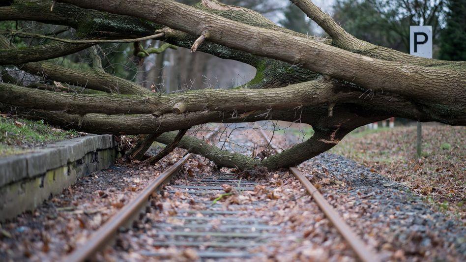 Hier hilft auch kein Unkrautvernichter mehr. Bislang versprüht die Deutsche Bahn jährlich 57 Tonnen Glyphosat, um ihre Schienen frei von Unkraut zu halten.