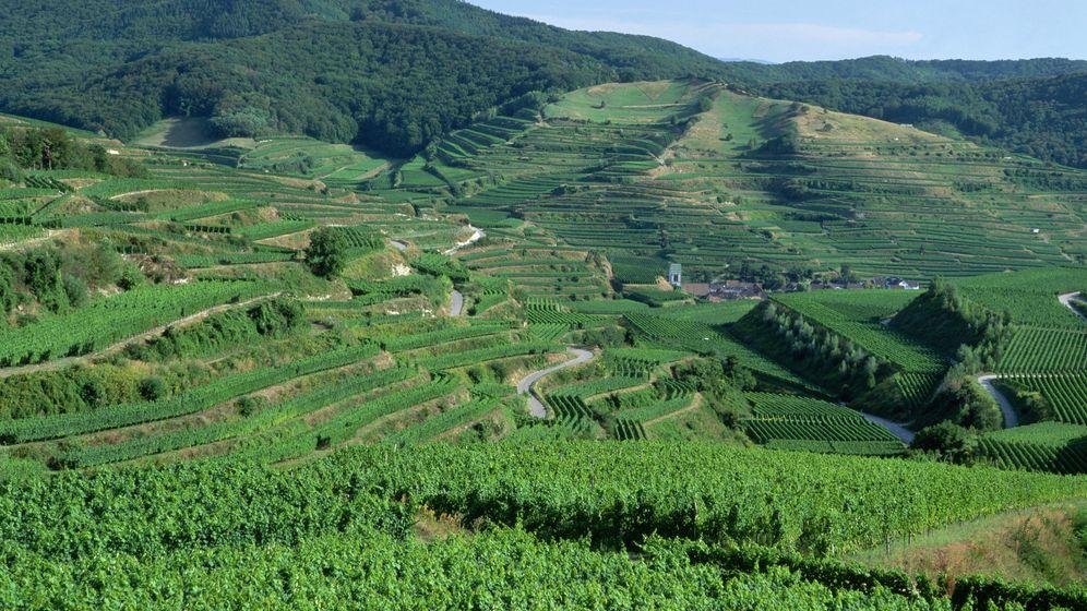 Kaiserstuhl: Sonne, Weintrauben und seltene Tiere