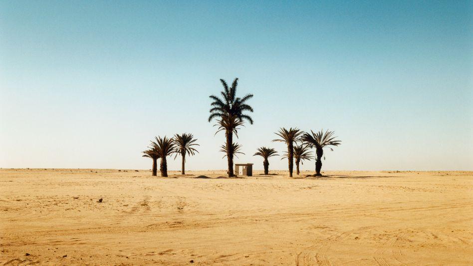 Oase in Sicht: In der Zinslandschaft herrscht nicht nur Dürre