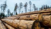Warum der Holzpreis wieder krachend einbricht