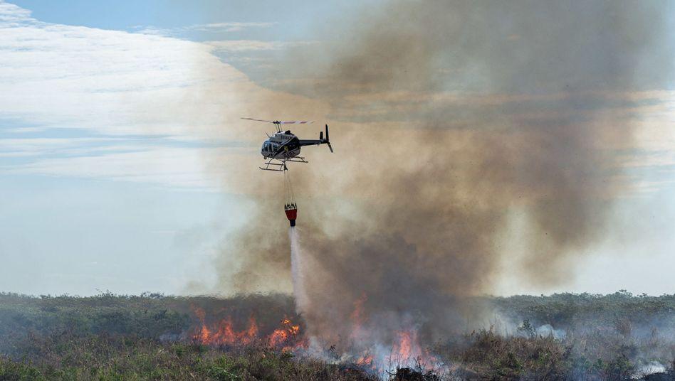 Die Ausmaße der Waldbrände im Amazonas-Gebiet sind enorm. Sie betreffen mittlerweile nicht nur Brasilien, sondern auch angrenzende Staaten