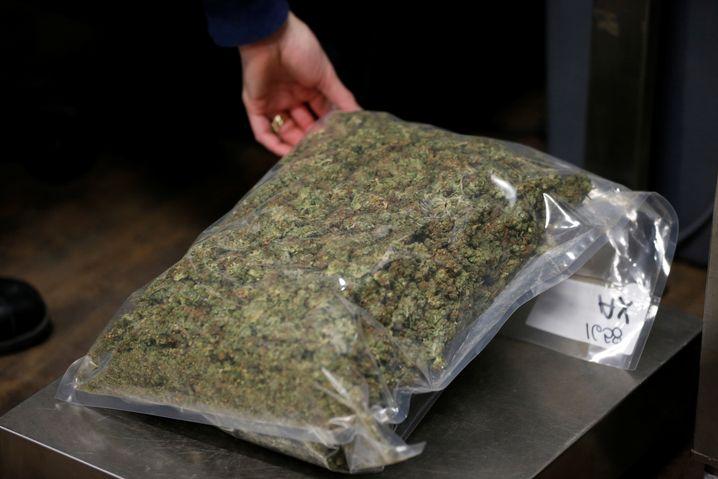 Getrocknetes Marijuana für den Massenmarkt