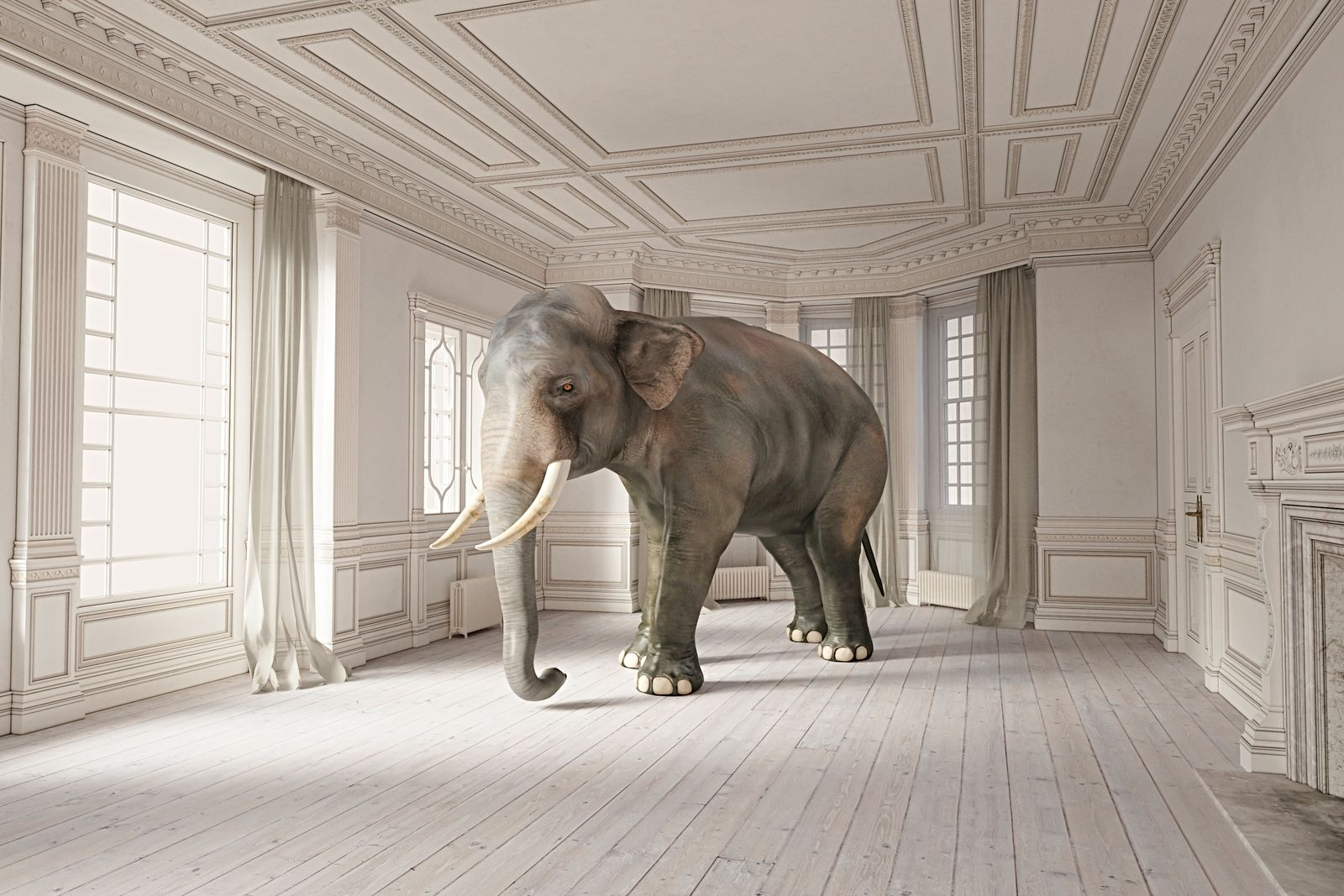 Elephant in the room series.