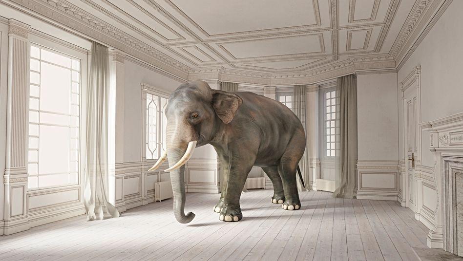 """The Elephant in the Room"" - wörtlich genommen."