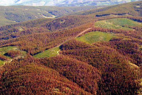 Schwer zu bewerten: Neuerdings werden verstärkt Investitionen in exotische Assets wie Holz oder Waldbestände angeboten
