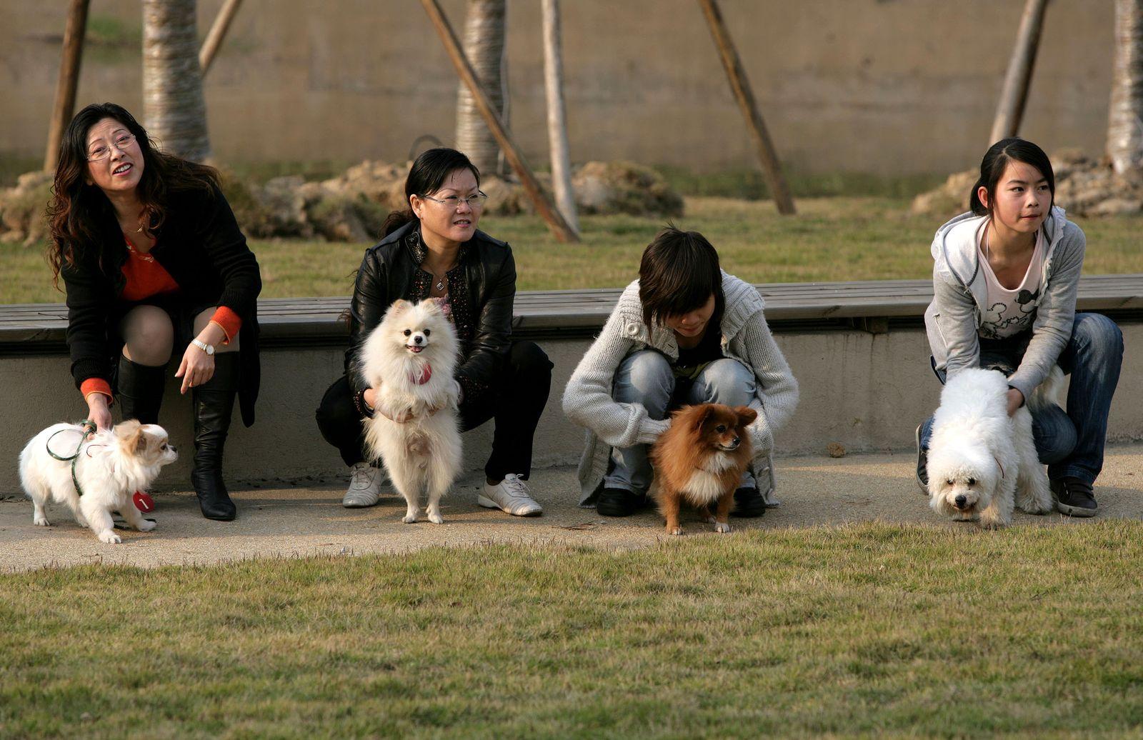 Chonqing / China / Hund / Hunde / Hunderennen