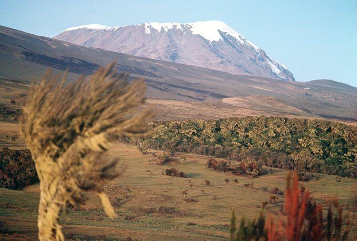 Kilimandscharo: Der höchste Berg Afrikas misst zwar stolze 5895 Meter, aber deshalb ist ein Aufstieg noch keine Expedition.