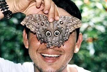 """Geschätzte zehn Prozent aller Schmetterlingsarten der Welt sind in Costa Rica heimisch. Der """"Caligo eurilochus sulanus"""" erreicht eine Flügelspannweite von bis zu zehn Zentimetern"""