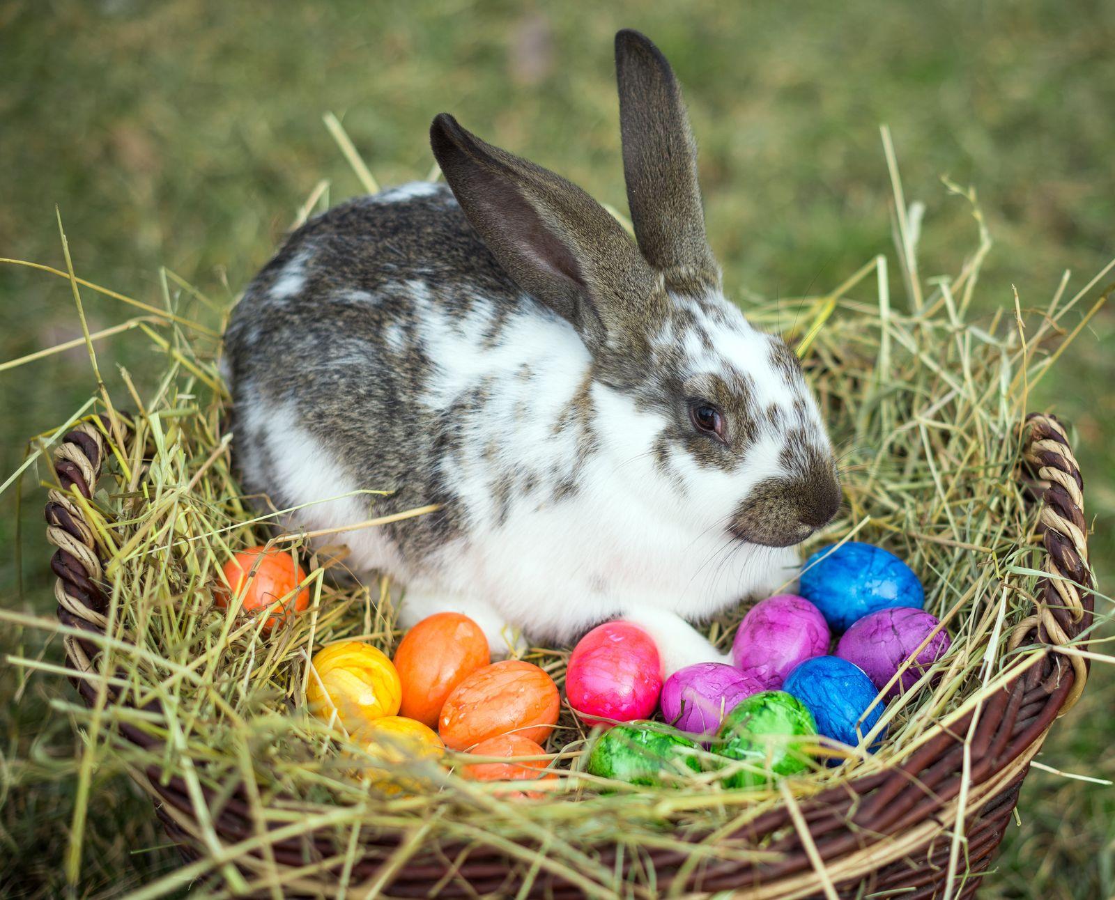 Ostern - Kaninchen und Ostereier