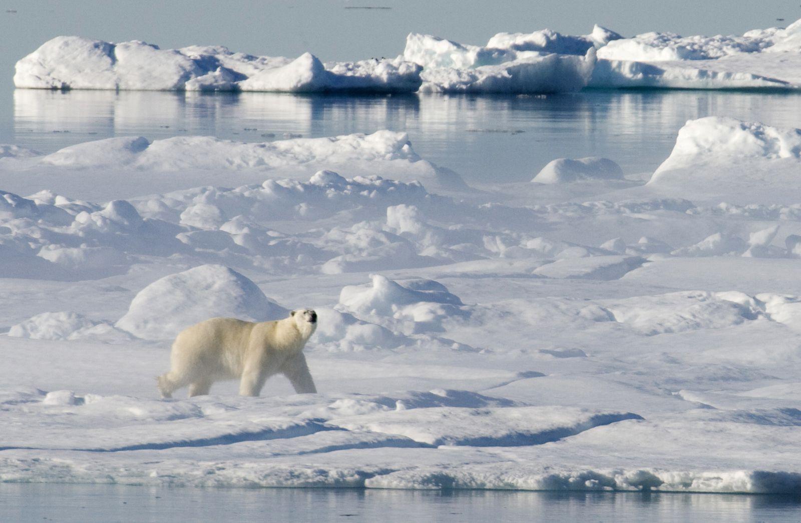 DEU Klima Eisbaeren