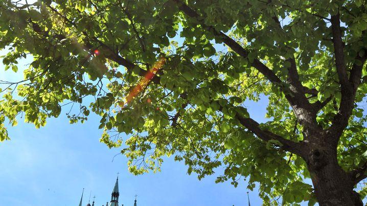 Ein Leuchtturm in Jena: Die größten Unternehmen aus Thüringen