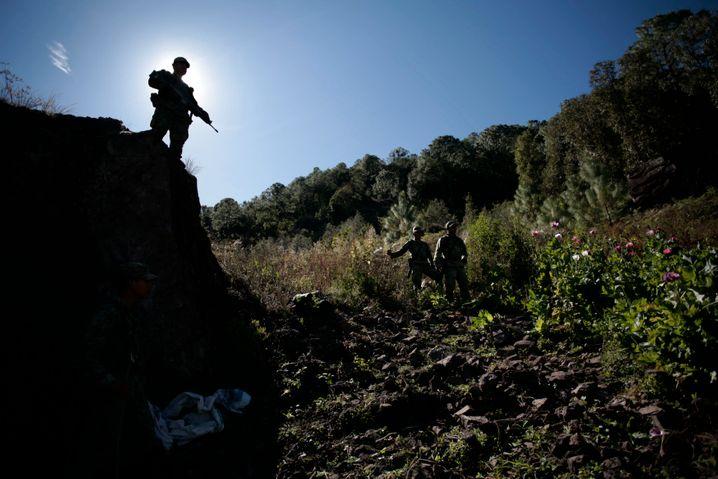 Macht in Mexiko: Soldaten patrouillieren durch Mohnfeld in Sinaloa