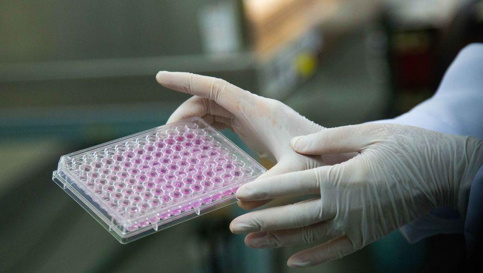 High-Tech-Forschung: Versuche mit CBD, THC und Krebszellen in einem Labor