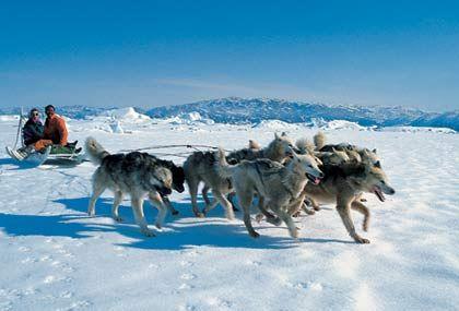 Schlitten fahren in Grönland