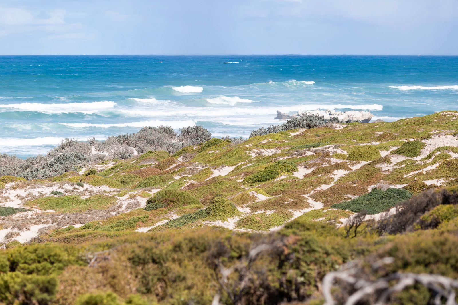 Kangaroo Island Seal Bay, Adelaide, Australia PUBLICATIONxNOTxINxCHN 707414777670402069