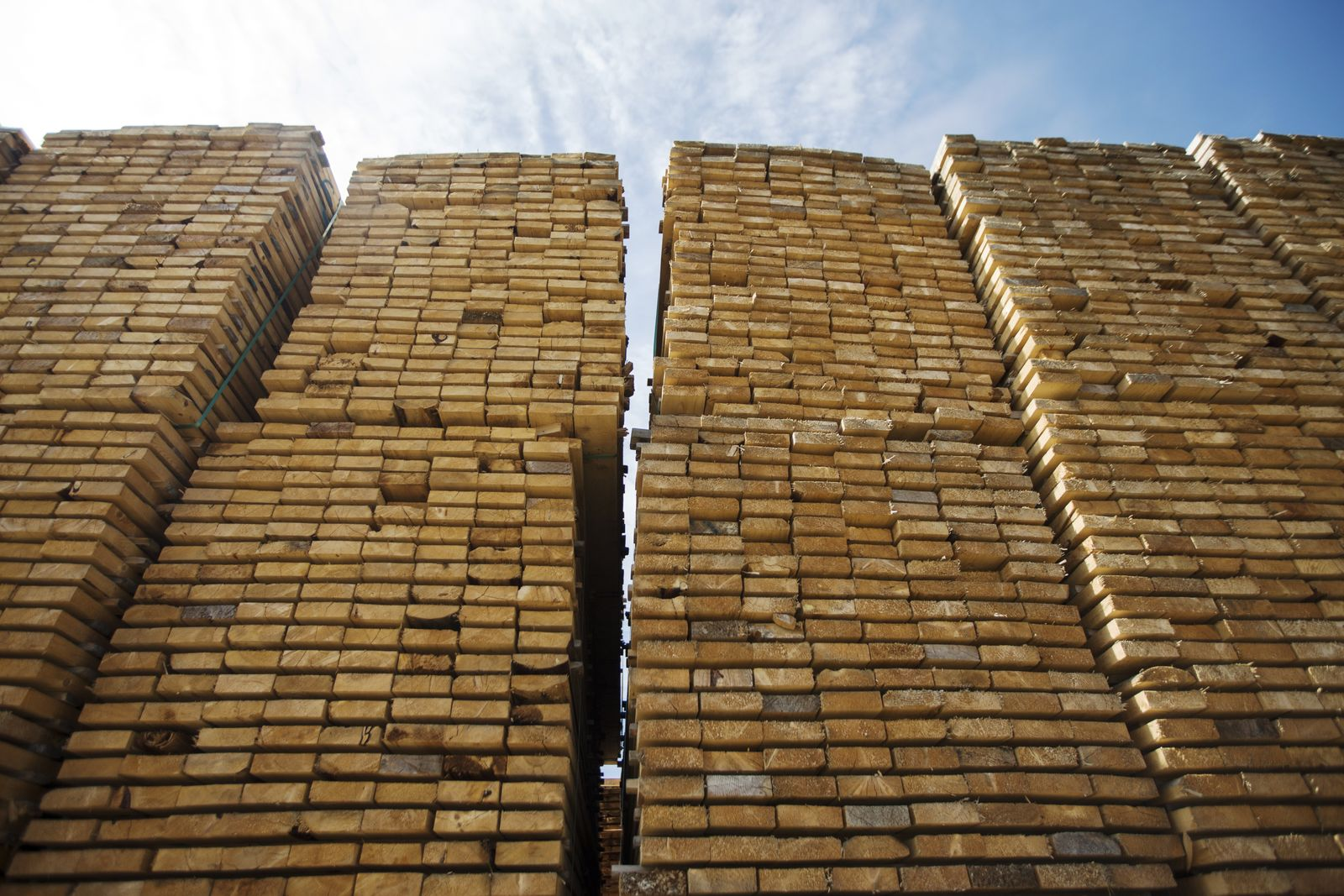 Large Stacks Of Cut Timber