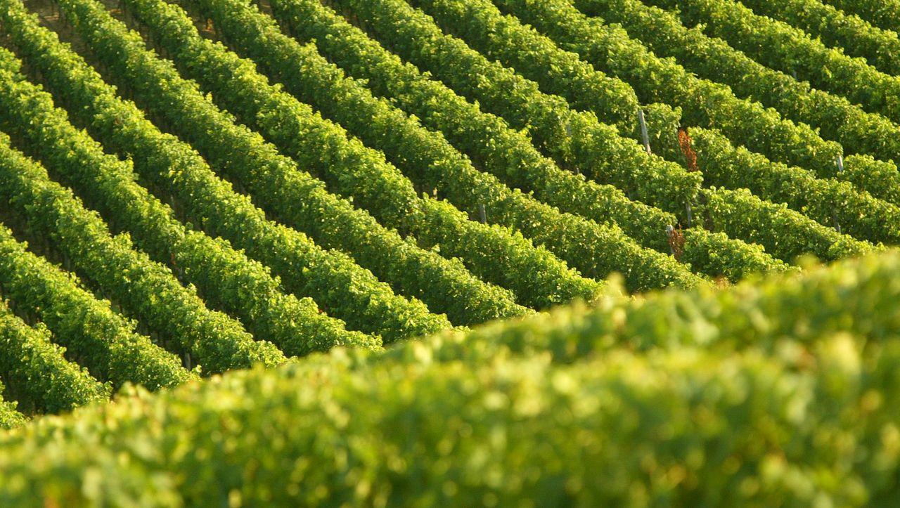 Wein: 3 besondere Weine, empfohlen von Sommelier Jan Konetzki