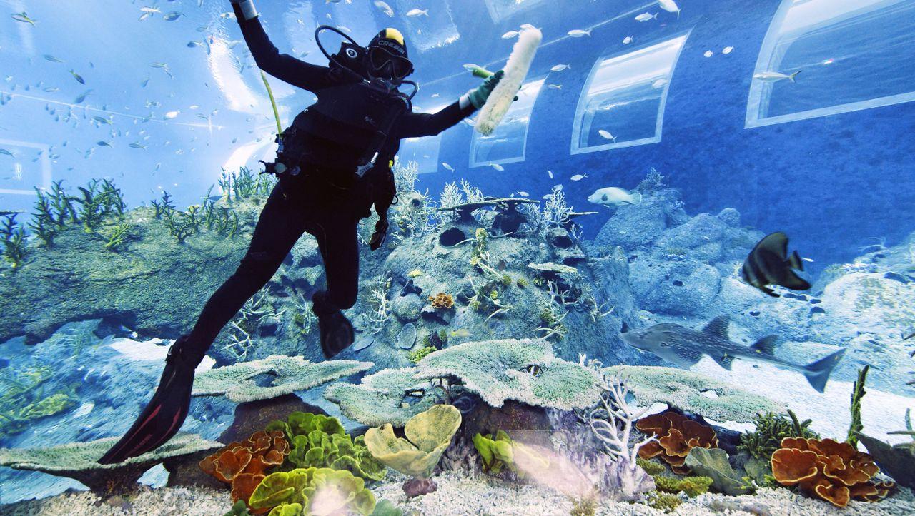 Reisebericht Singapur: Das größte Aquarium der Welt