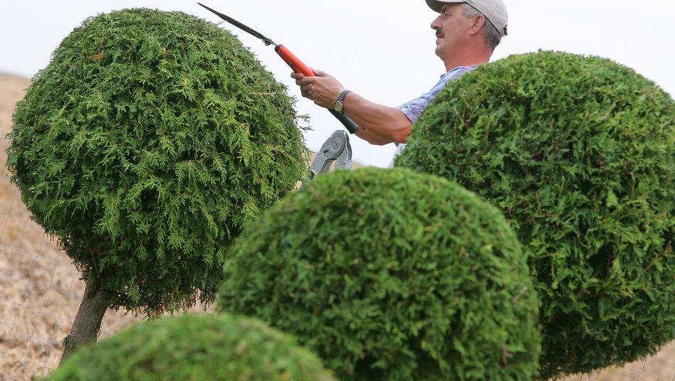 Gartenarbeit: Auch diese Kosten legt der Vermieter auf die Mieter um