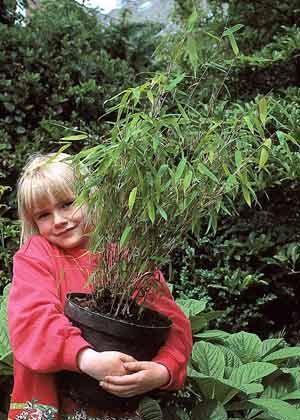 Zu Klein? Vor dem Aufstellen im Garten überprüfen, ob der Topf während des Winters für die Pflanze zu klein geworden ist